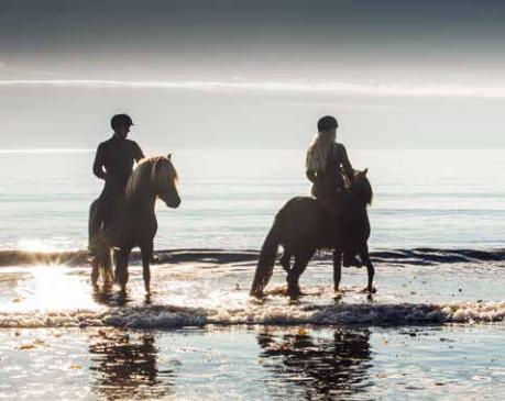 thorlakshofn_horses